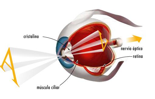 0df0d3059bcba Si tenemos cualquier problema visual, debemos acudir a la consulta de un  óptico-optometrista, un profesional de la visión que, tras un completo y  adecuado ...